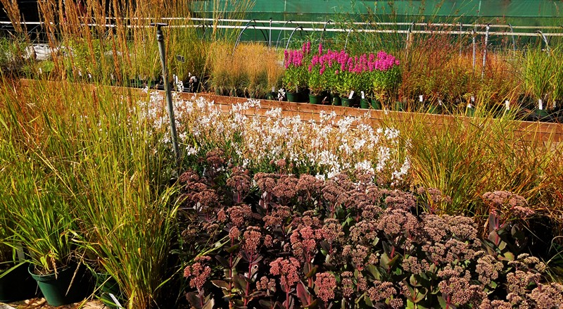 atlas growers of perennials
