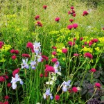 Species, groups or families of perennials