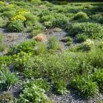 Pruhonice trvalkove zahony