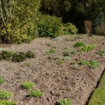 Establishing and caring for flowerbeds