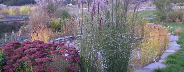 vodní zahrada Komořany
