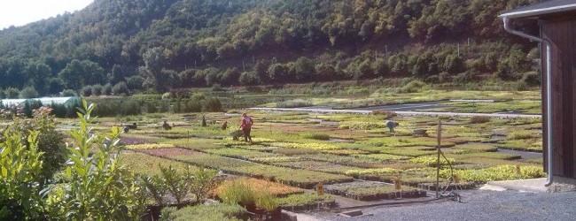 zahradnictvi flos